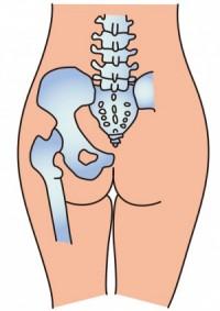 股関節の説明図