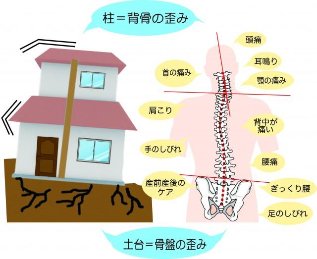 骨盤と背骨、家の土台と柱の関係