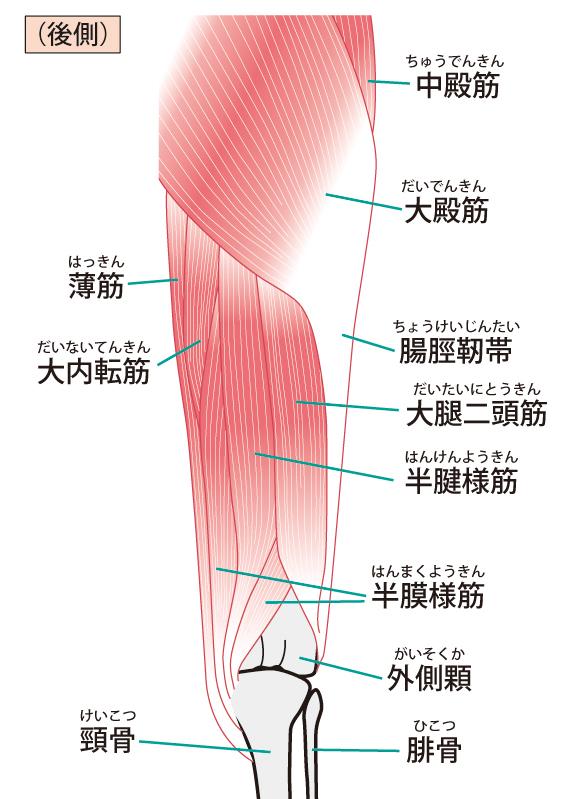 膝の説明図